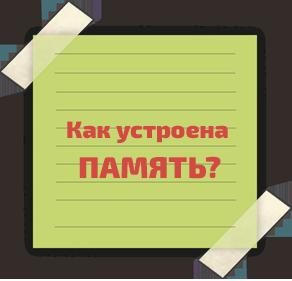 курсы развития памяти для детей в Витебске